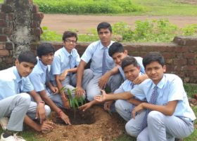 Plantation_2